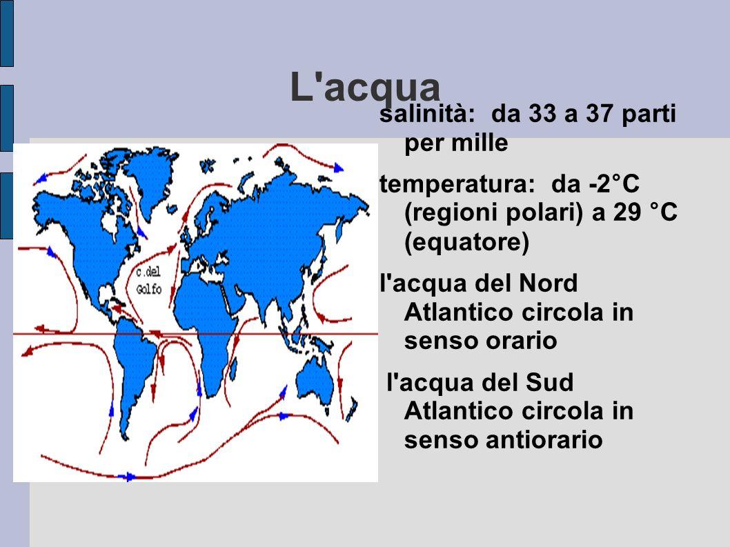 L acqua salinità: da 33 a 37 parti per mille