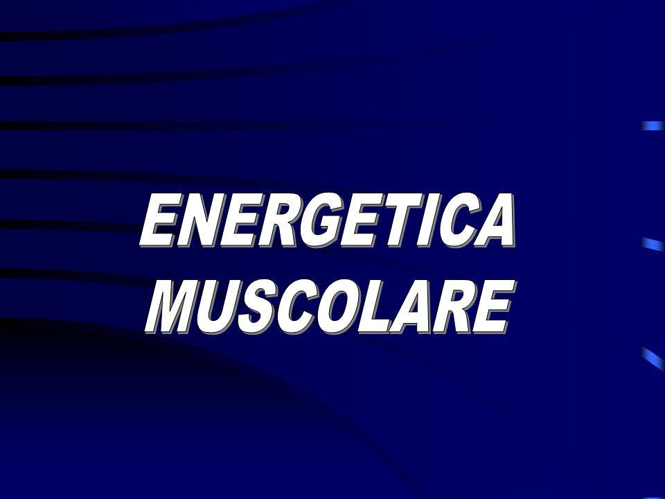 ENERGETICA MUSCOLARE