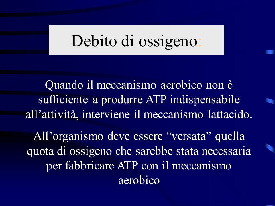Debito di ossigeno: Quando il meccanismo aerobico non è sufficiente a produrre ATP indispensabile all'attività, interviene il meccanismo lattacido.