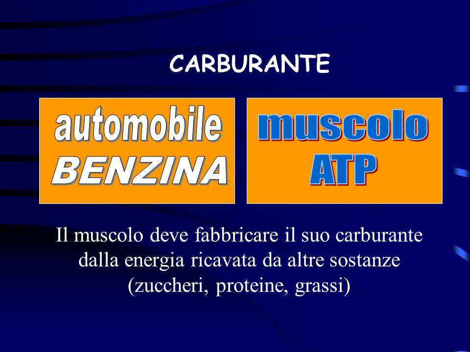 CARBURANTE muscolo ATP