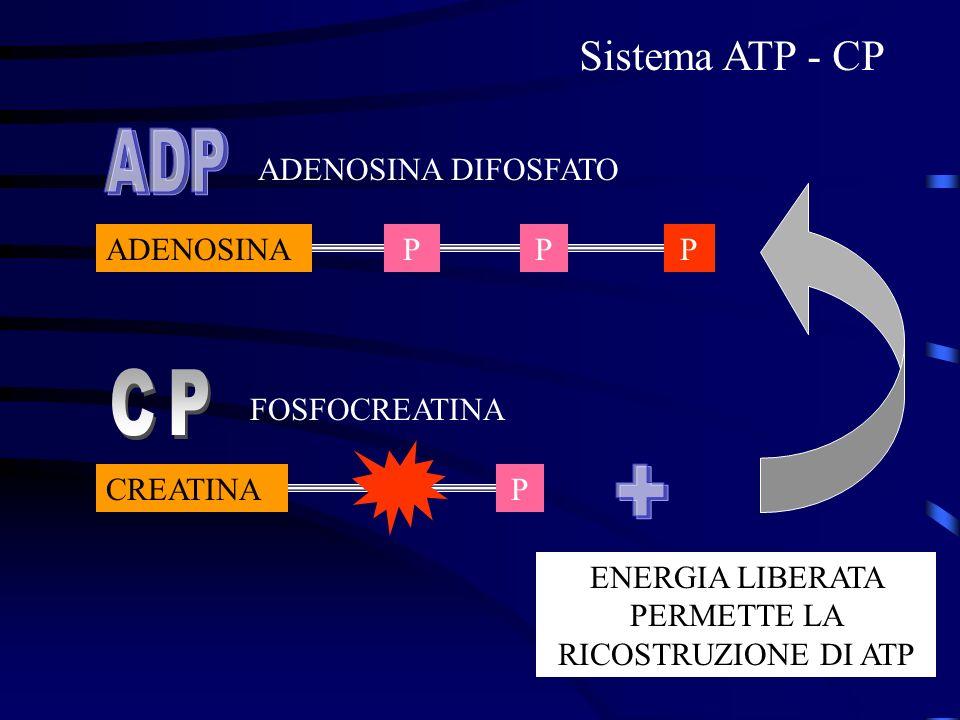 ENERGIA LIBERATA PERMETTE LA RICOSTRUZIONE DI ATP