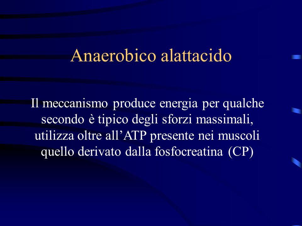 Anaerobico alattacido