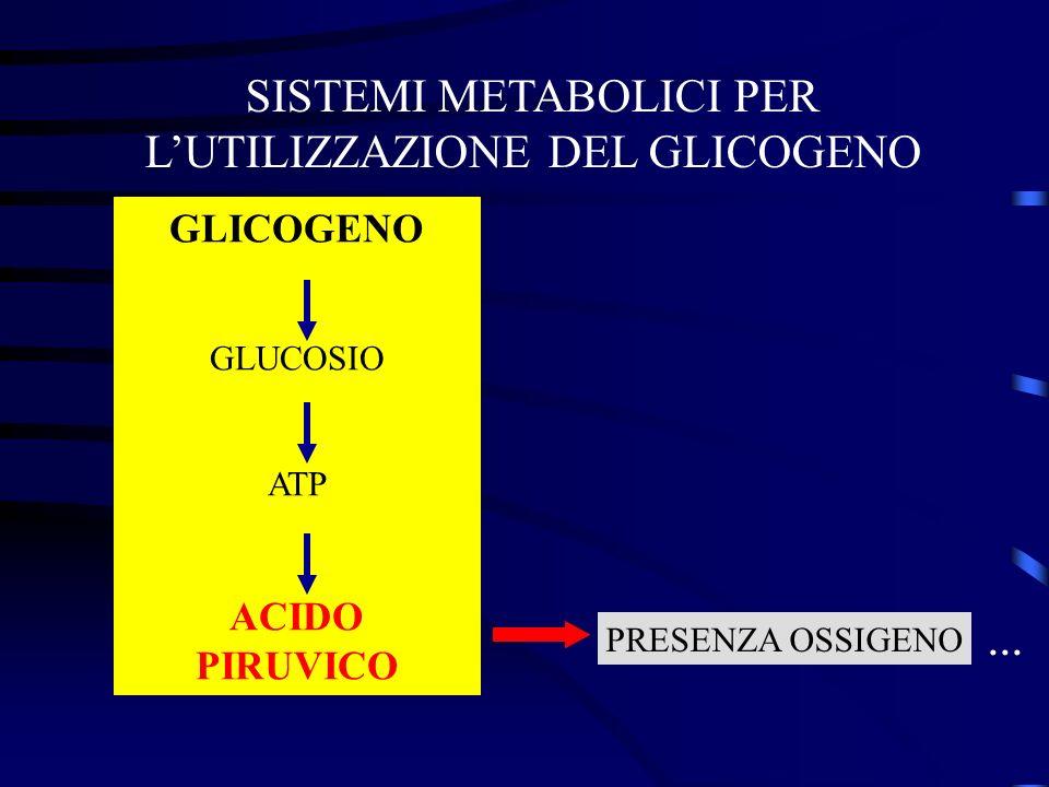 SISTEMI METABOLICI PER L'UTILIZZAZIONE DEL GLICOGENO
