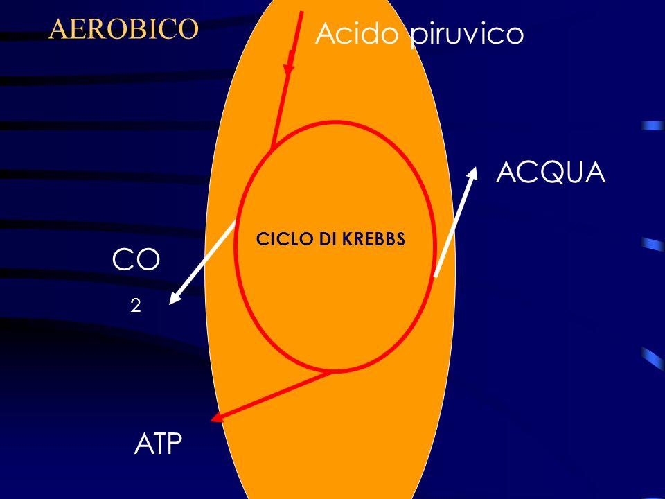 AEROBICO Acido piruvico ACQUA Ciclo di Krebbs CICLO DI KREBBS CO2 ATP