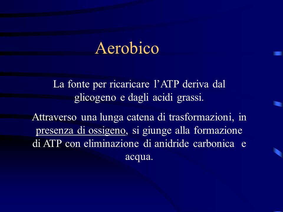 Aerobico La fonte per ricaricare l'ATP deriva dal glicogeno e dagli acidi grassi.
