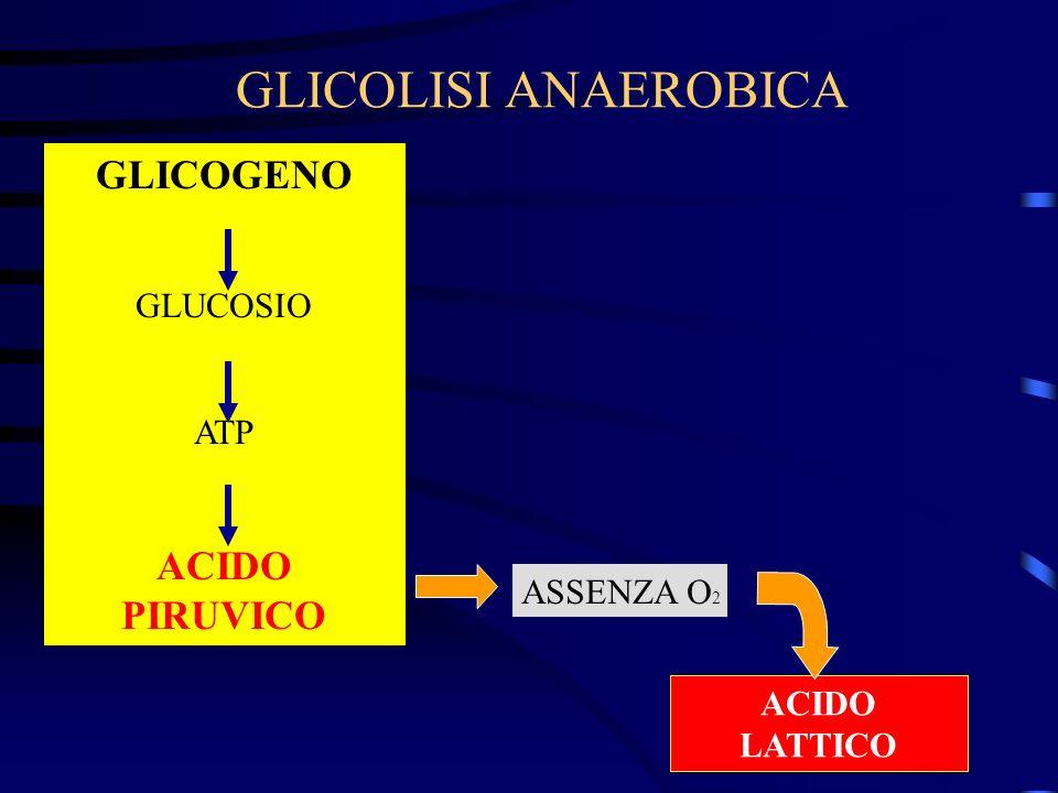 GLICOLISI ANAEROBICA GLICOGENO ACIDO PIRUVICO GLUCOSIO ATP ASSENZA O2