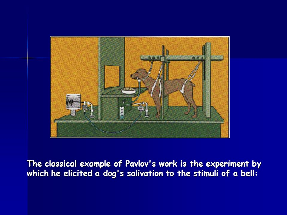The classical example of Pavlov s work is the experiment by which he elicited a dog s salivation to the stimuli of a bell: