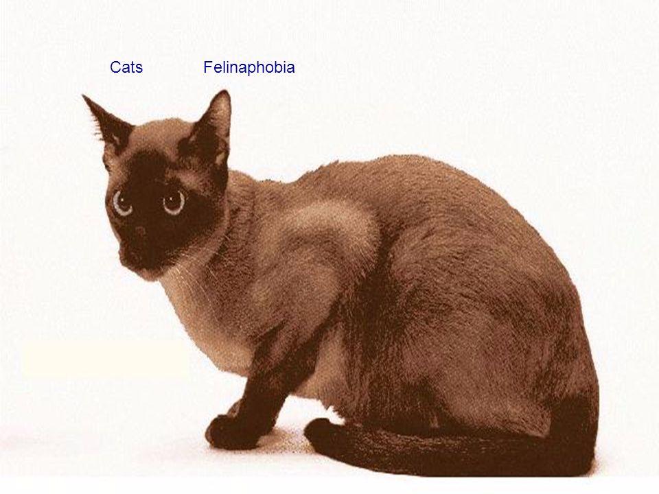 Cats Felinaphobia
