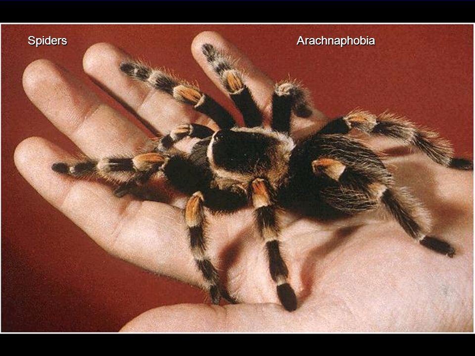 Spiders Arachnaphobia