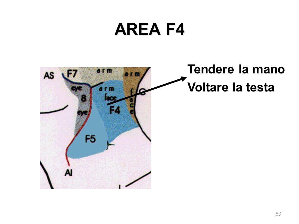 AREA F4 Tendere la mano Voltare la testa