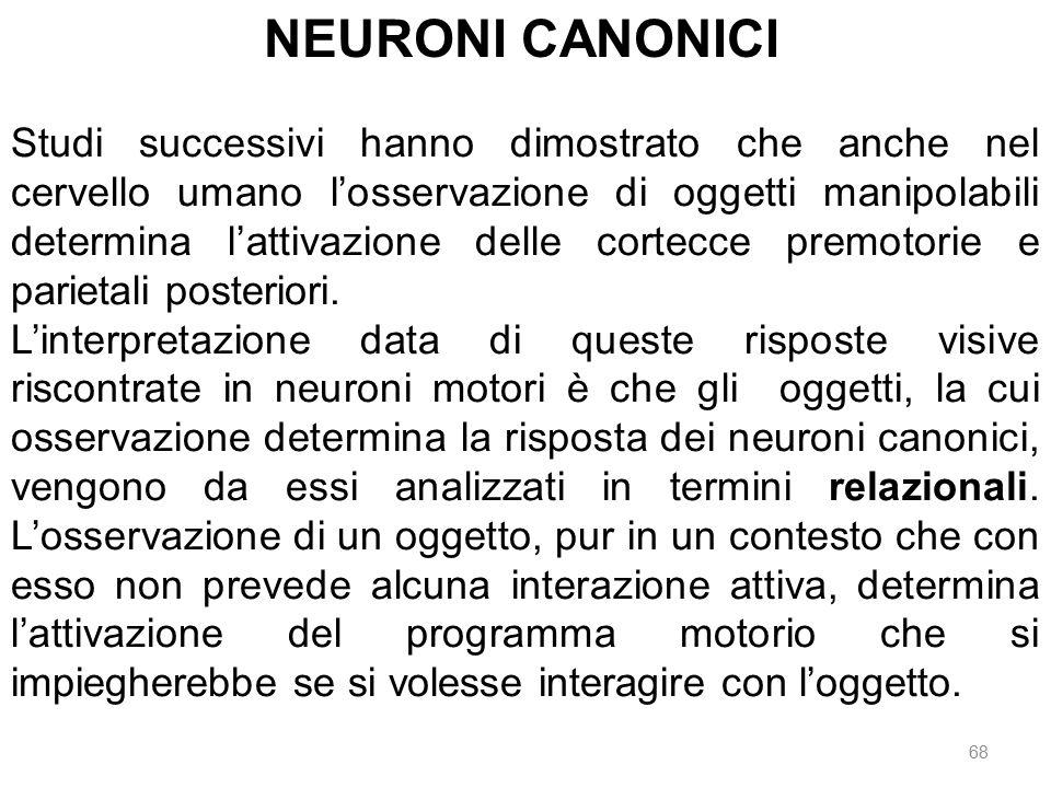 NEURONI CANONICI