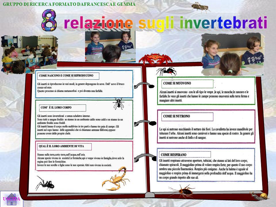 relazione sugli invertebrati
