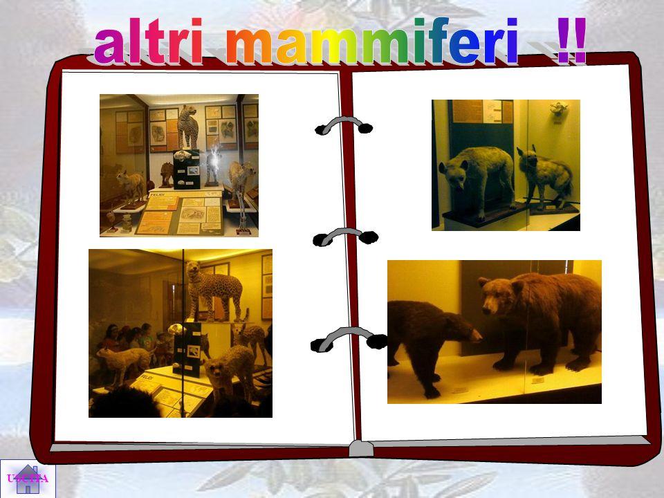 altri mammiferi !!