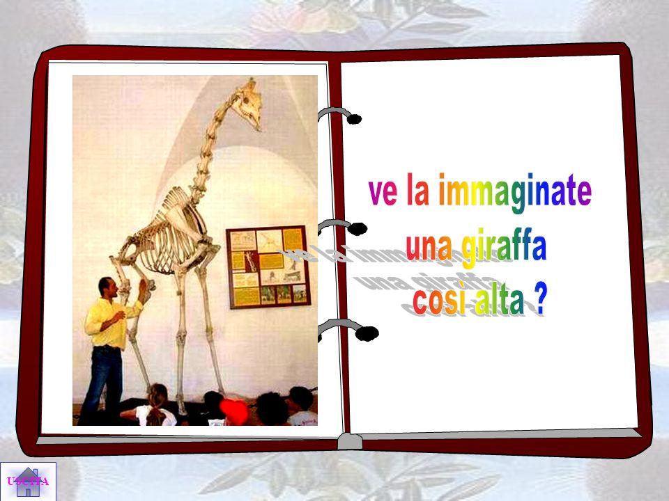 ve la immaginate una giraffa così alta