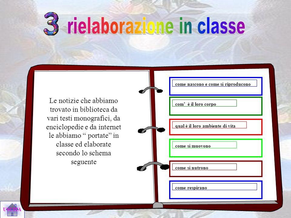rielaborazione in classe