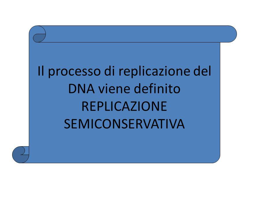 Il processo di replicazione del DNA viene definito REPLICAZIONE SEMICONSERVATIVA