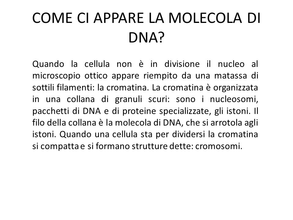 COME CI APPARE LA MOLECOLA DI DNA