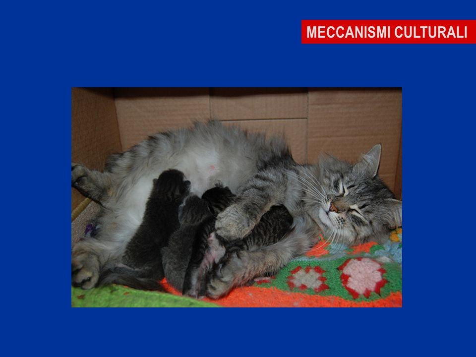 MECCANISMI CULTURALI