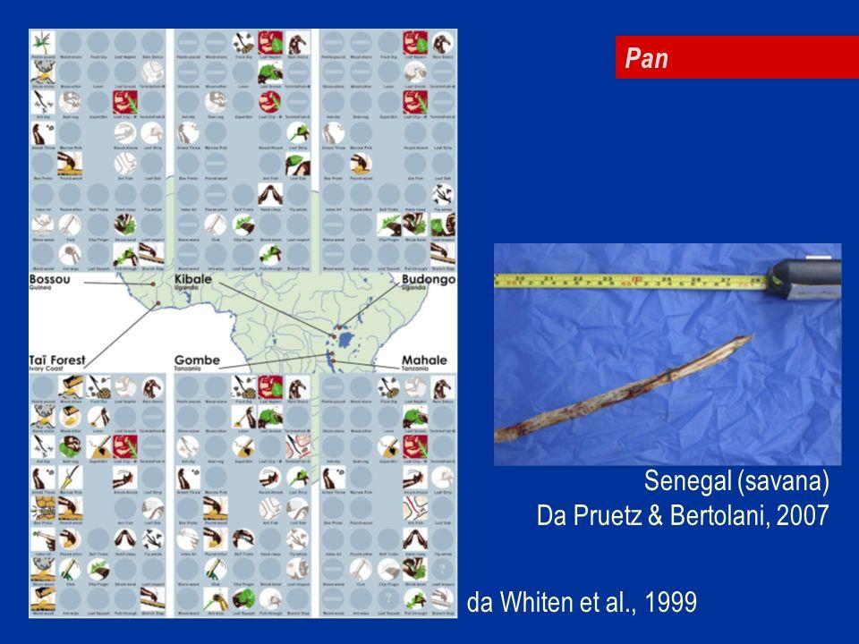 Pan Senegal (savana) Da Pruetz & Bertolani, 2007 da Whiten et al., 1999