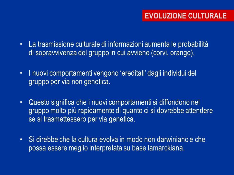 EVOLUZIONE CULTURALE La trasmissione culturale di informazioni aumenta le probabilità di sopravvivenza del gruppo in cui avviene (corvi, orango).