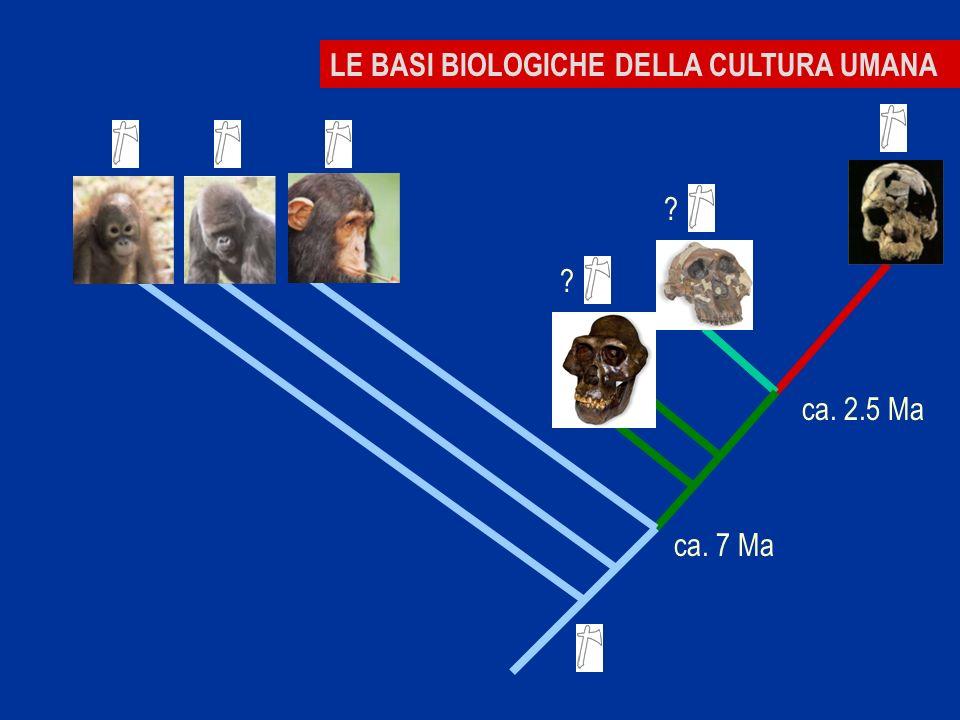 LE BASI BIOLOGICHE DELLA CULTURA UMANA