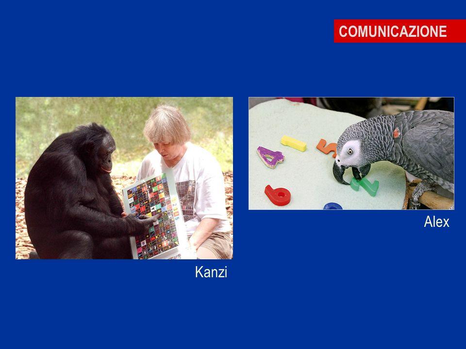 COMUNICAZIONE Alex Kanzi