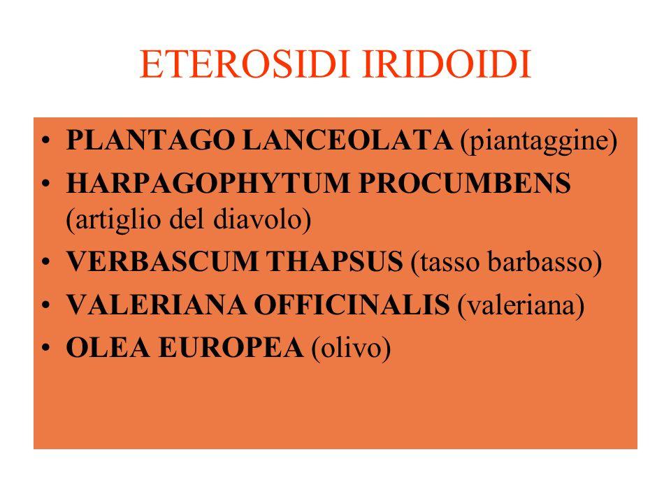ETEROSIDI IRIDOIDI PLANTAGO LANCEOLATA (piantaggine)