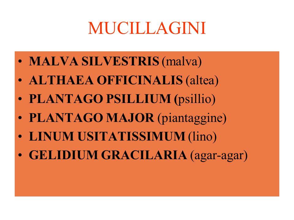 MUCILLAGINI MALVA SILVESTRIS (malva) ALTHAEA OFFICINALIS (altea)
