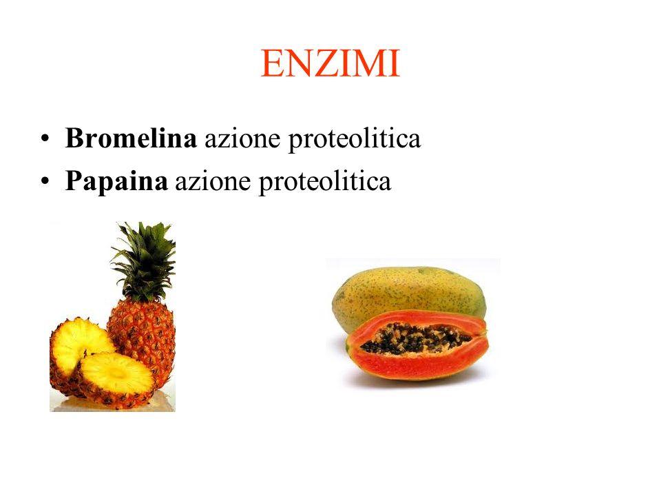 ENZIMI Bromelina azione proteolitica Papaina azione proteolitica