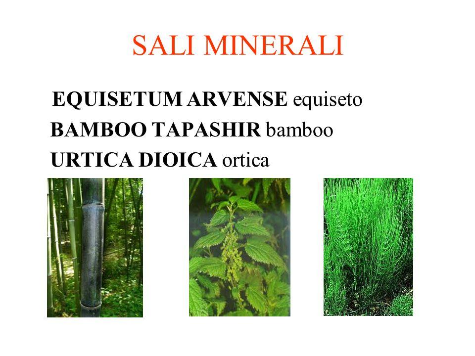 SALI MINERALI EQUISETUM ARVENSE equiseto BAMBOO TAPASHIR bamboo