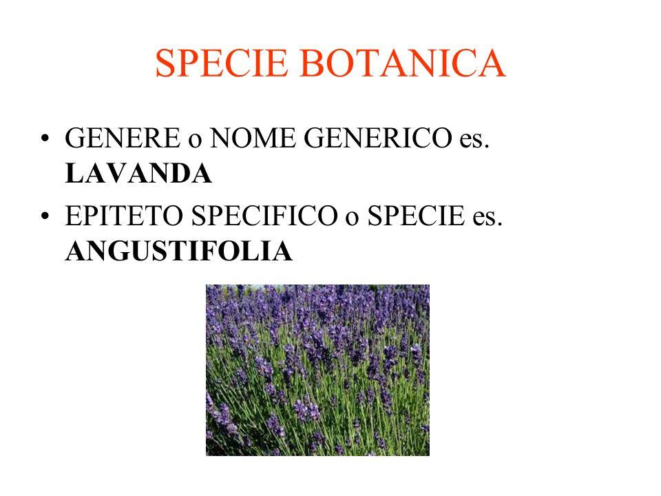 SPECIE BOTANICA GENERE o NOME GENERICO es. LAVANDA