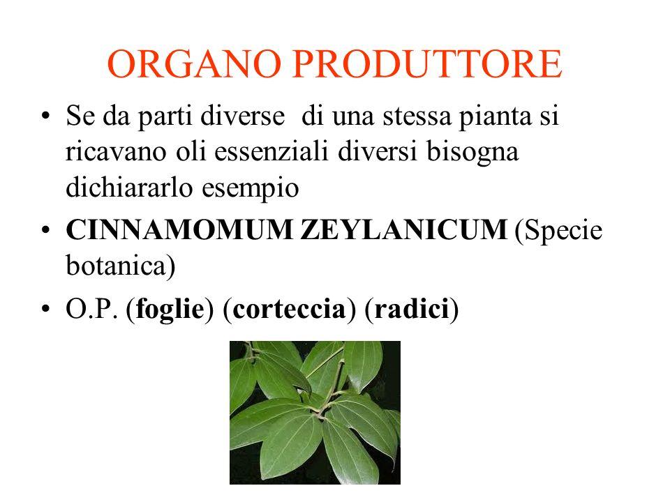 ORGANO PRODUTTORE Se da parti diverse di una stessa pianta si ricavano oli essenziali diversi bisogna dichiararlo esempio.
