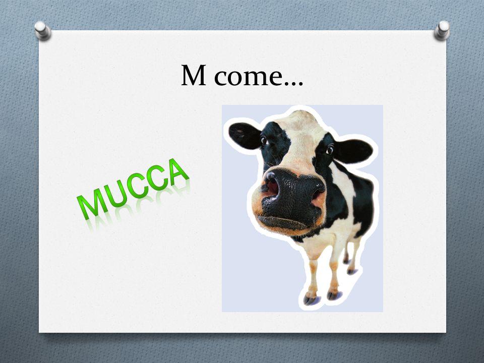 M come… Mucca