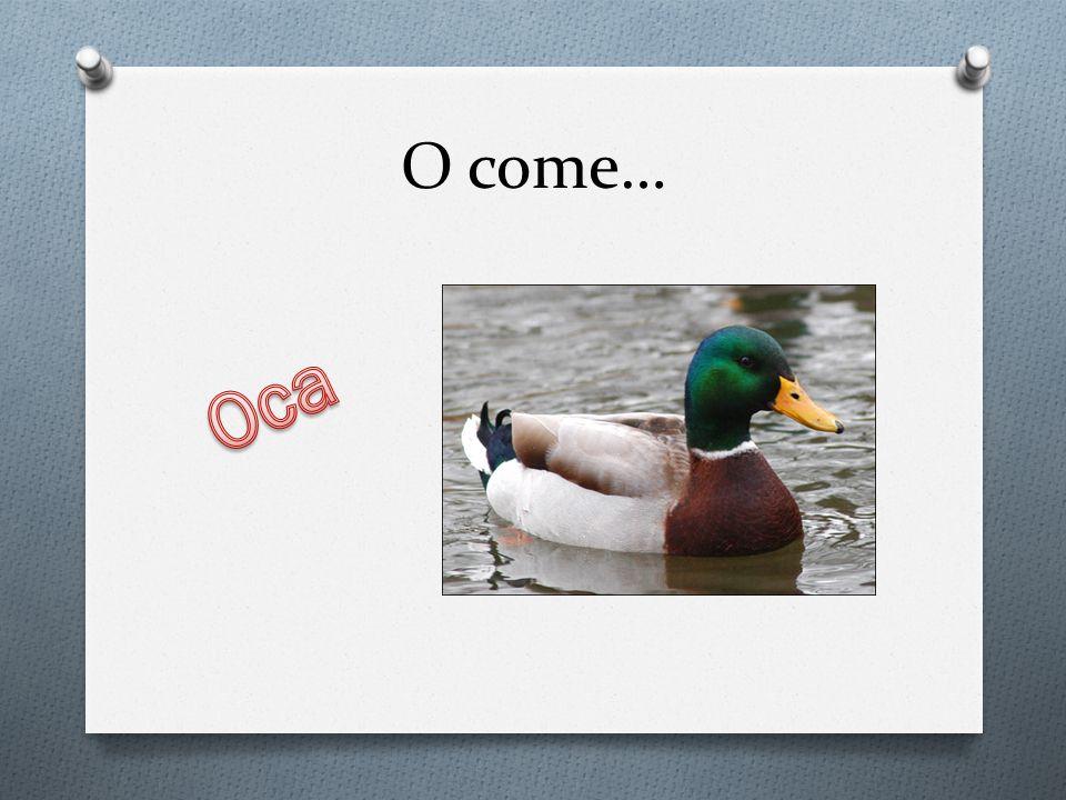 O come… Oca