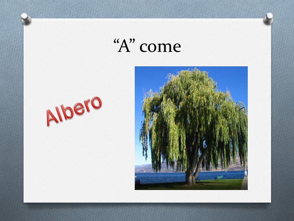A come Albero