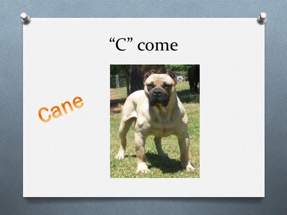 C come Cane