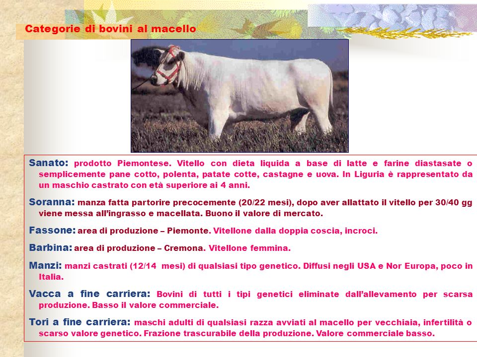 Categorie di bovini al macello
