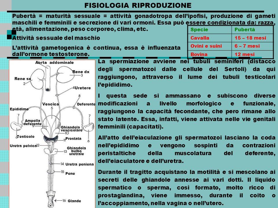 FISIOLOGIA RIPRODUZIONE