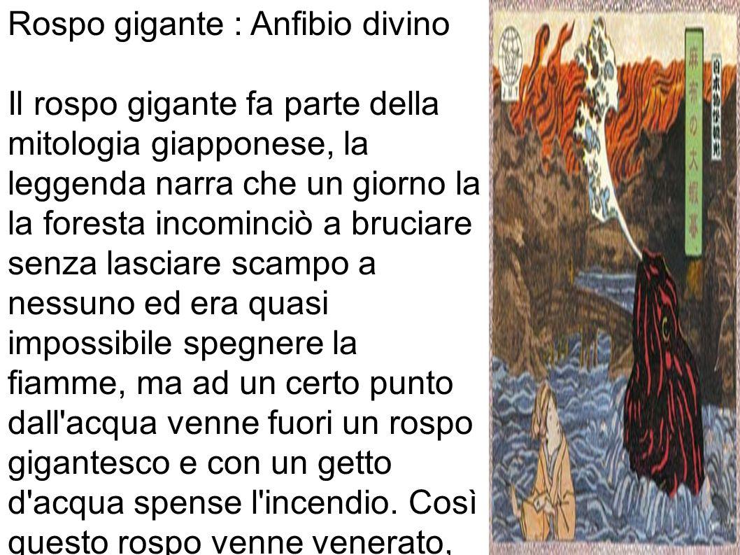 Rospo gigante : Anfibio divino