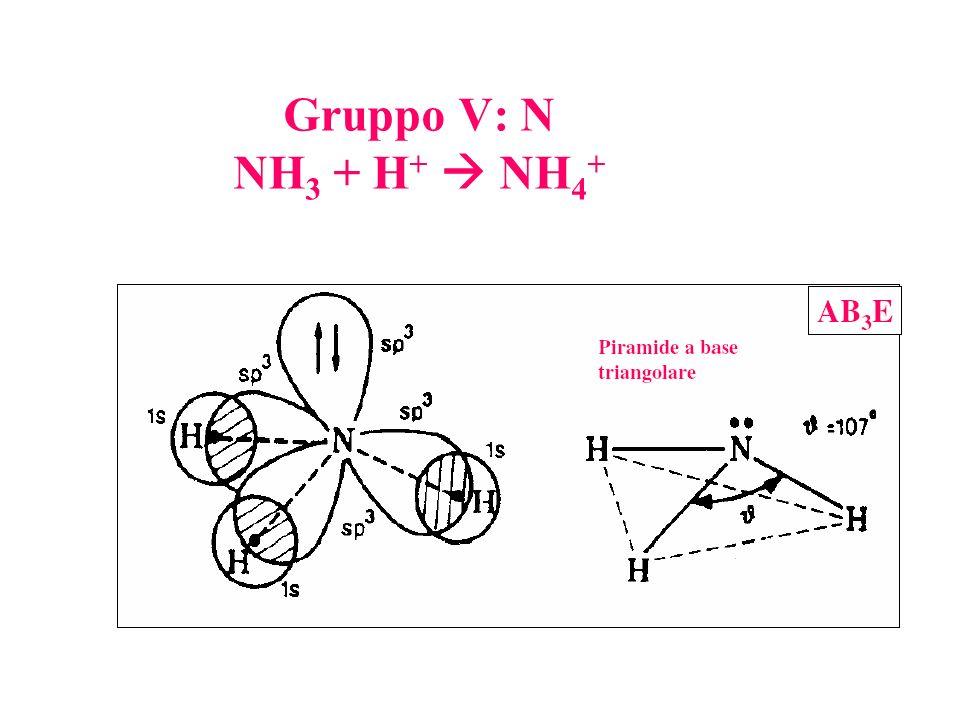 Gruppo V: N NH3 + H+  NH4+