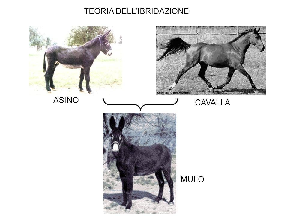 TEORIA DELL'IBRIDAZIONE