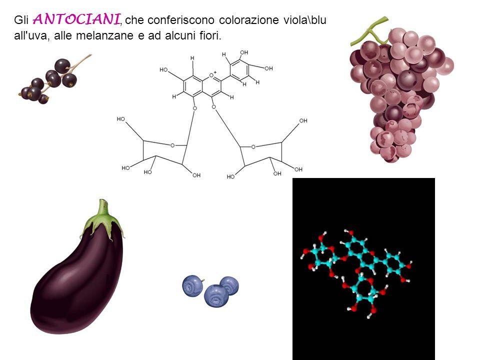 Gli ANTOCIANI, che conferiscono colorazione viola\blu all uva, alle melanzane e ad alcuni fiori.