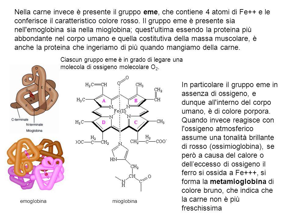 Nella carne invece è presente il gruppo eme, che contiene 4 atomi di Fe++ e le conferisce il caratteristico colore rosso. Il gruppo eme è presente sia nell emoglobina sia nella mioglobina; quest ultima essendo la proteina più abbondante nel corpo umano e quella costitutiva della massa muscolare, è anche la proteina che ingeriamo di più quando mangiamo della carne.