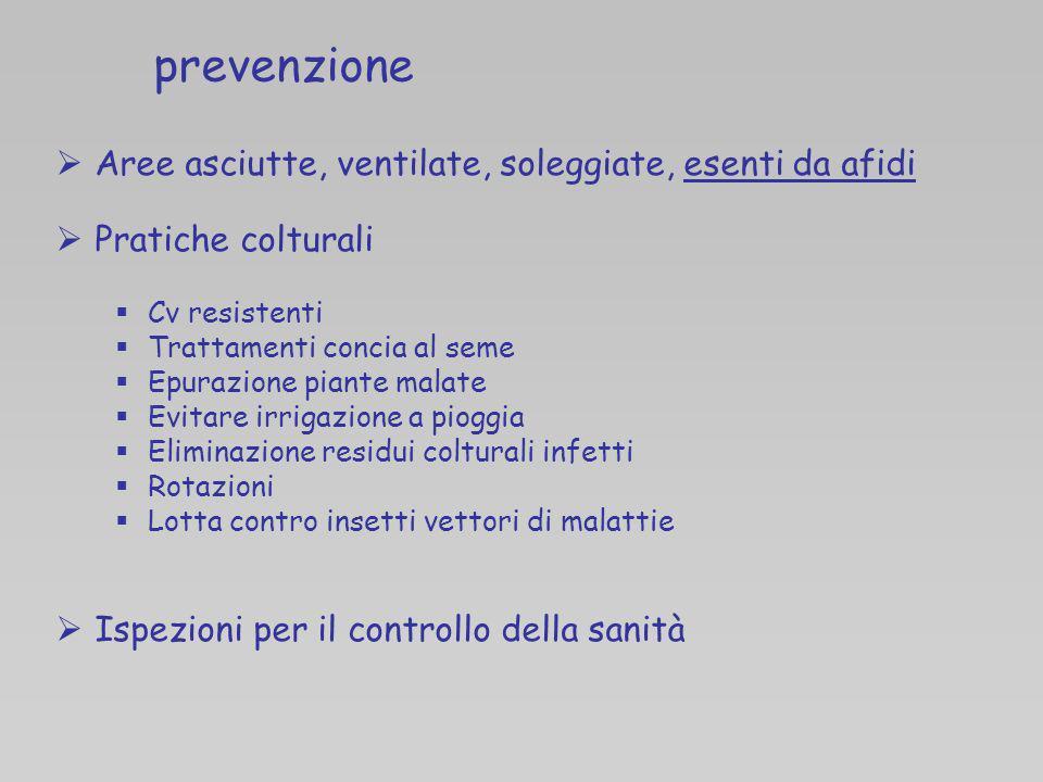 prevenzione Aree asciutte, ventilate, soleggiate, esenti da afidi