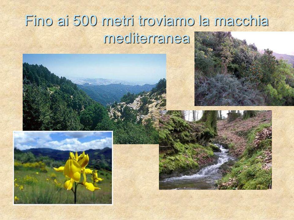 Fino ai 500 metri troviamo la macchia mediterranea