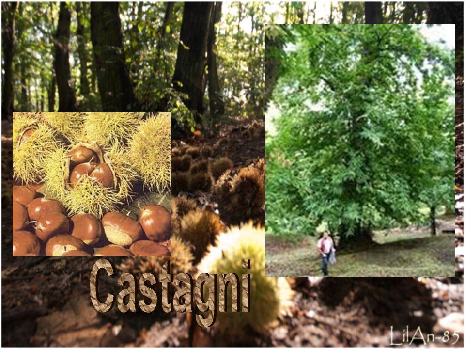 Castagni