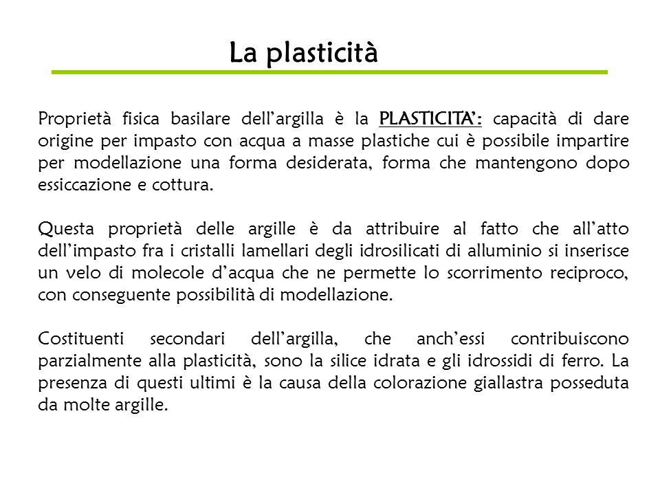 La plasticità