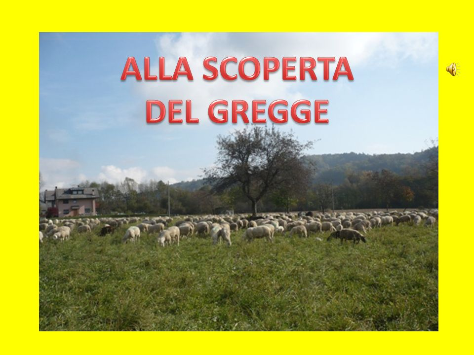 ALLA SCOPERTA DEL GREGGE