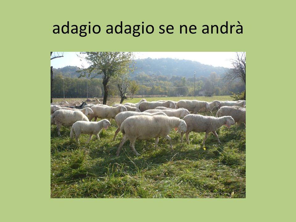 adagio adagio se ne andrà