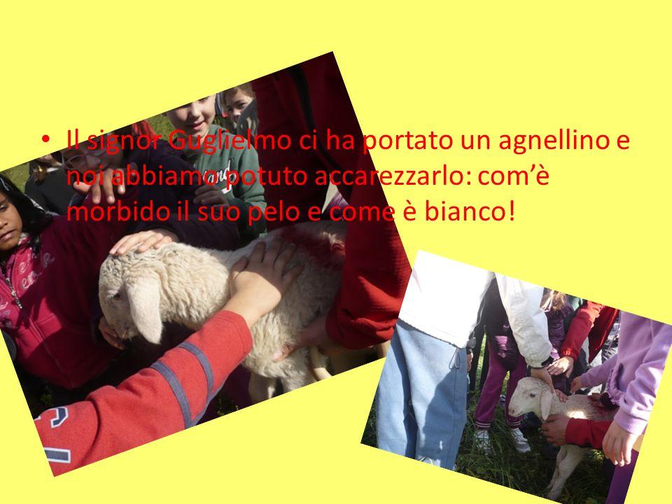 Il signor Guglielmo ci ha portato un agnellino e noi abbiamo potuto accarezzarlo: com'è morbido il suo pelo e come è bianco!